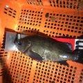 junさんの愛知県小牧市での釣果写真