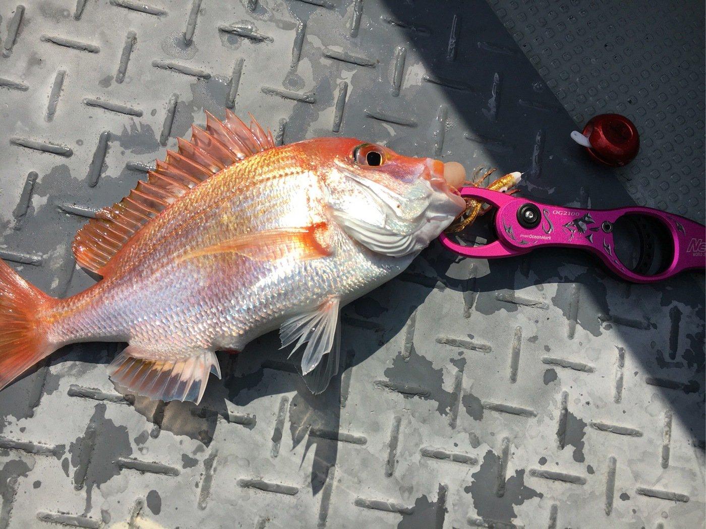 筆頭さんの投稿画像,写っている魚はレンコダイ