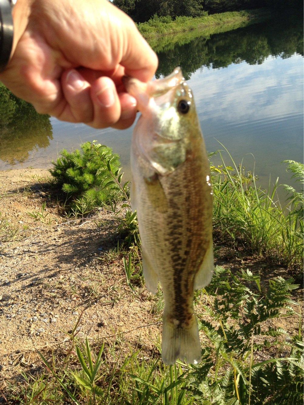 ishiya3さんの投稿画像,写っている魚は