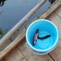 サイタマ86さんの埼玉県深谷市での釣果写真