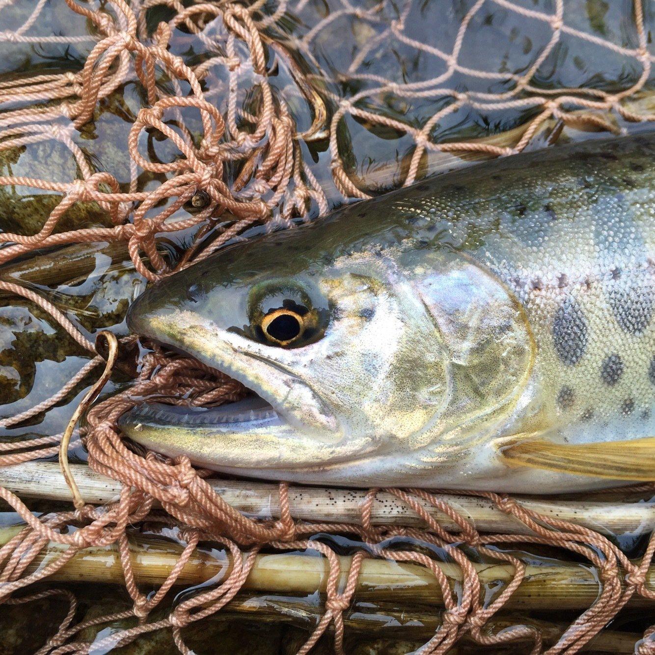 hiroさんの投稿画像,写っている魚はヤマメ