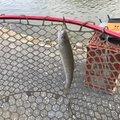 てつおTVさんの埼玉県比企郡での釣果写真