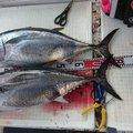 影竿さんのマグロの釣果写真