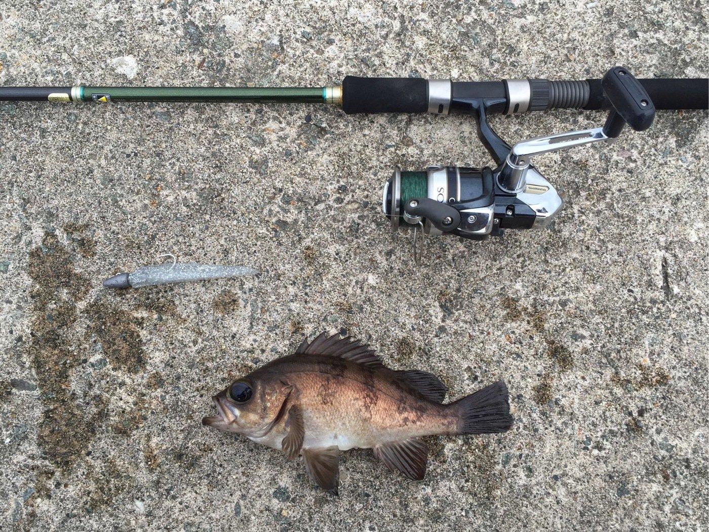 NCMさんの投稿画像,写っている魚はメバル