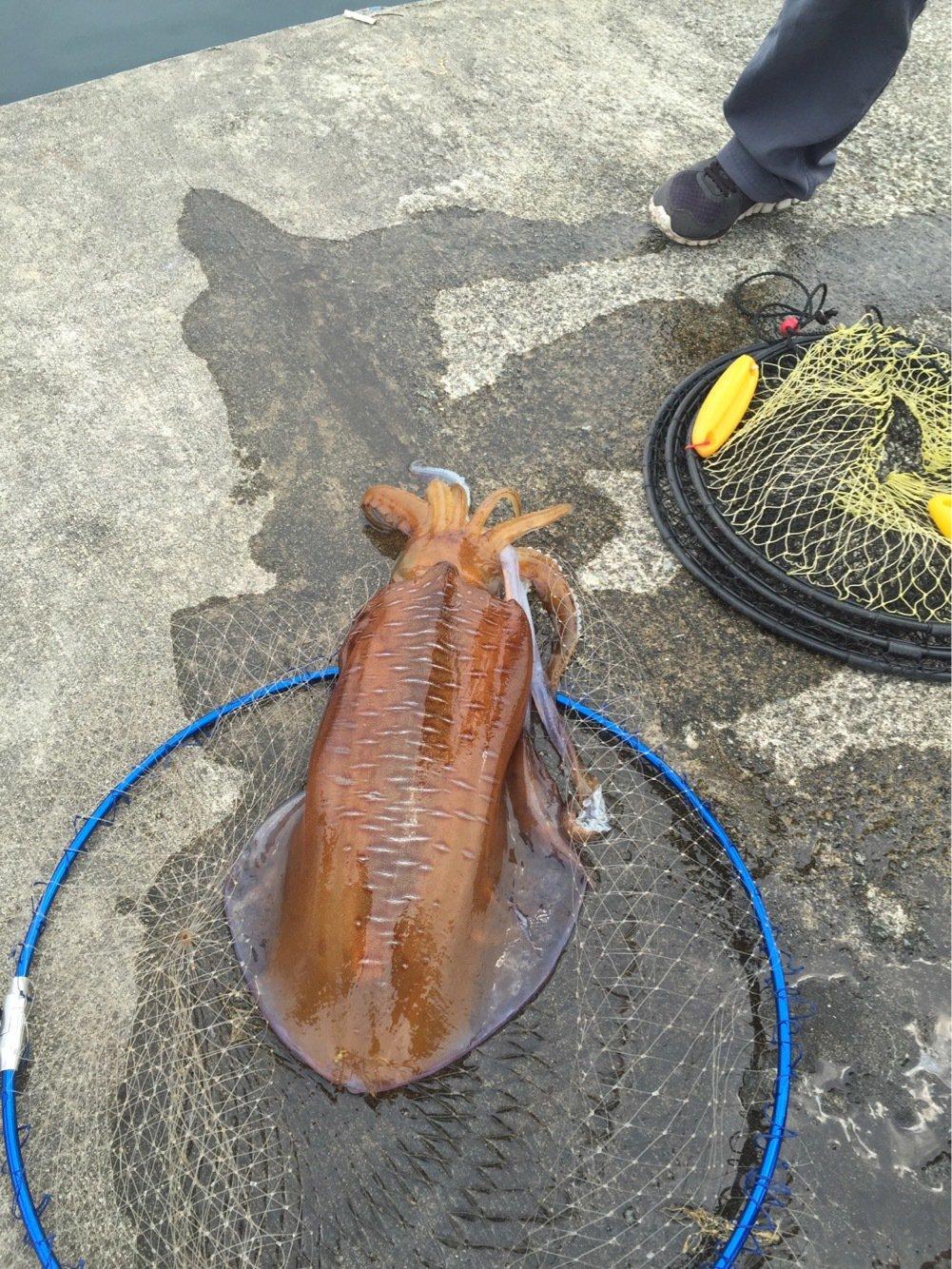しょーごさんの投稿画像,写っている魚はアオリイカ
