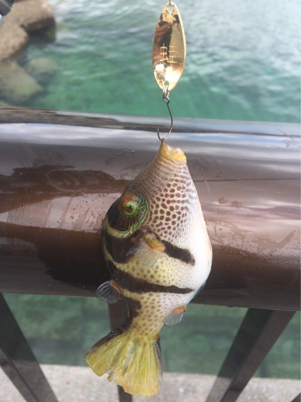 yamachaaanさんの投稿画像,写っている魚はフグ