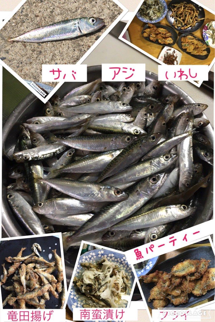 Angler🇯🇵TAKASHIさんの投稿画像,写っている魚はゴマサバ