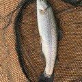 タケシさんの埼玉県川越市での釣果写真