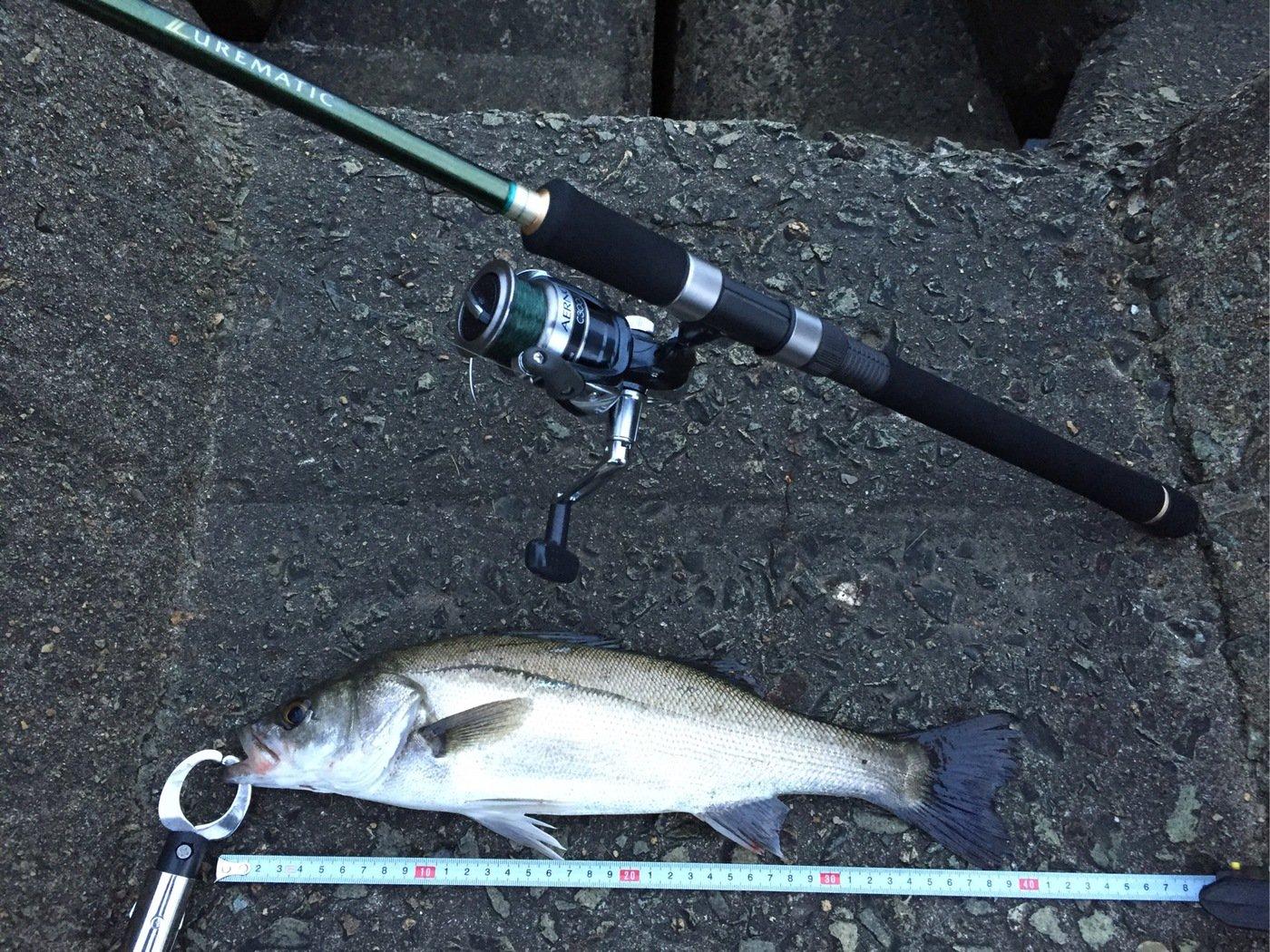 NCMさんの投稿画像,写っている魚はスズキ