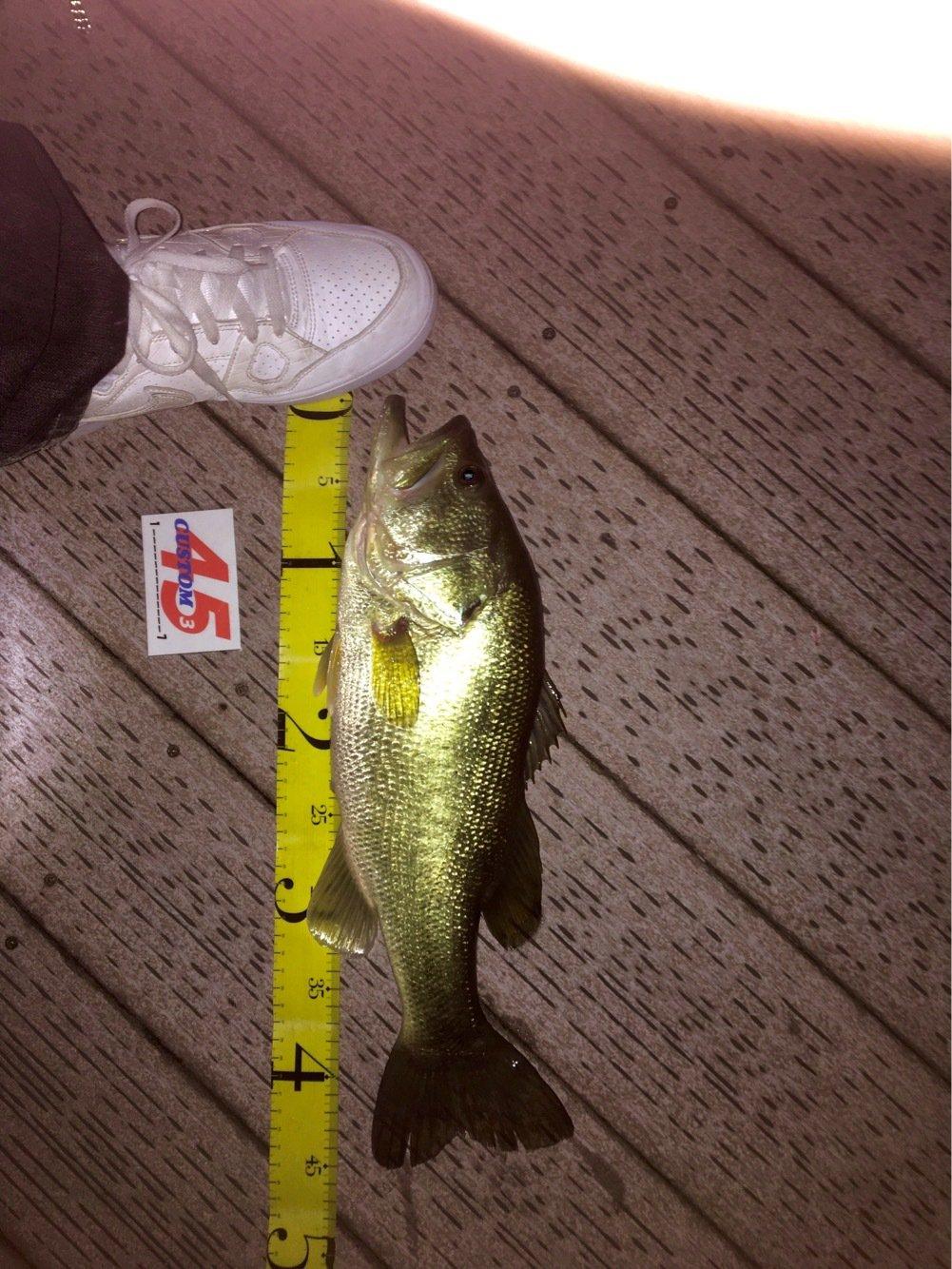 琵琶湖Basserさんの投稿画像,写っている魚はブラックバス