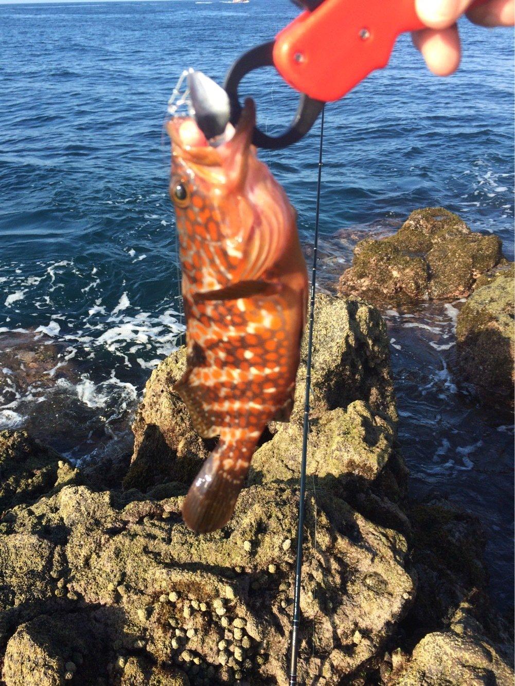 鋼平さんの投稿画像,写っている魚はキジハタ