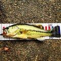 NAOKIさんの大阪府豊能郡での釣果写真