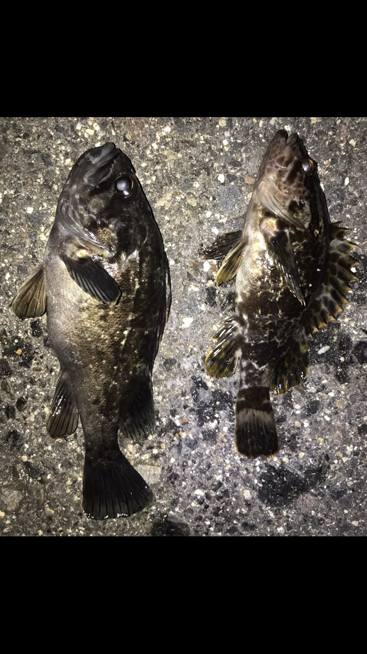 noriさんの投稿画像,写っている魚はタケノコメバル,カサゴ