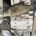 やっさんさんの栃木県河内郡での釣果写真