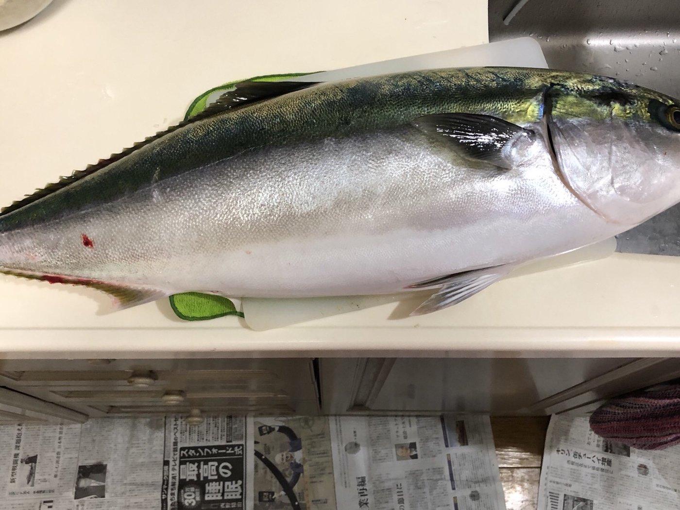きみちゃんさんの投稿画像,写っている魚は