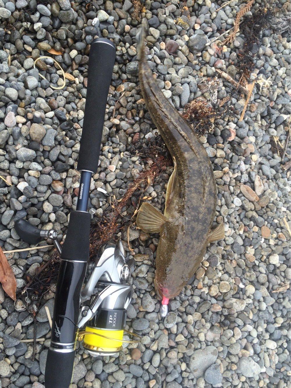 丸田海猫さんの投稿画像,写っている魚は