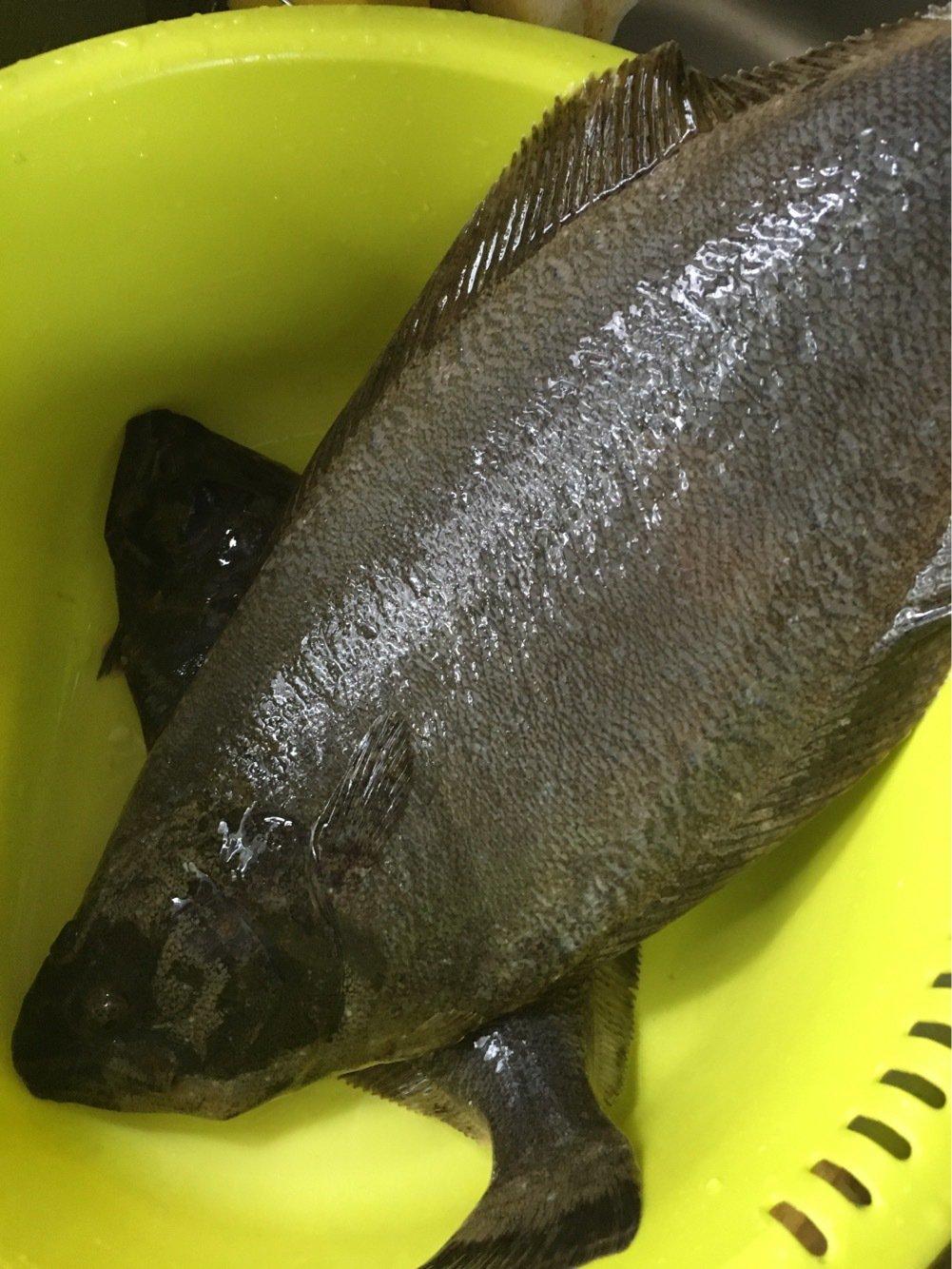 ぬこ好きさんの投稿画像,写っている魚はヒラメ