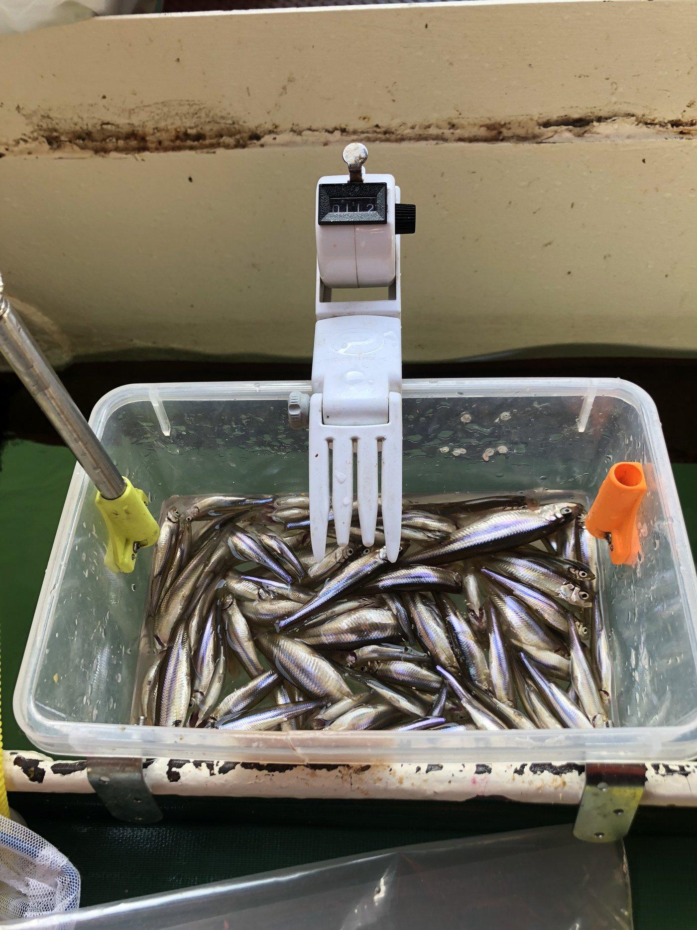 fx oyajiさんの投稿画像,写っている魚は