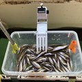 fx oyajiさんの長野県上水内郡での釣果写真