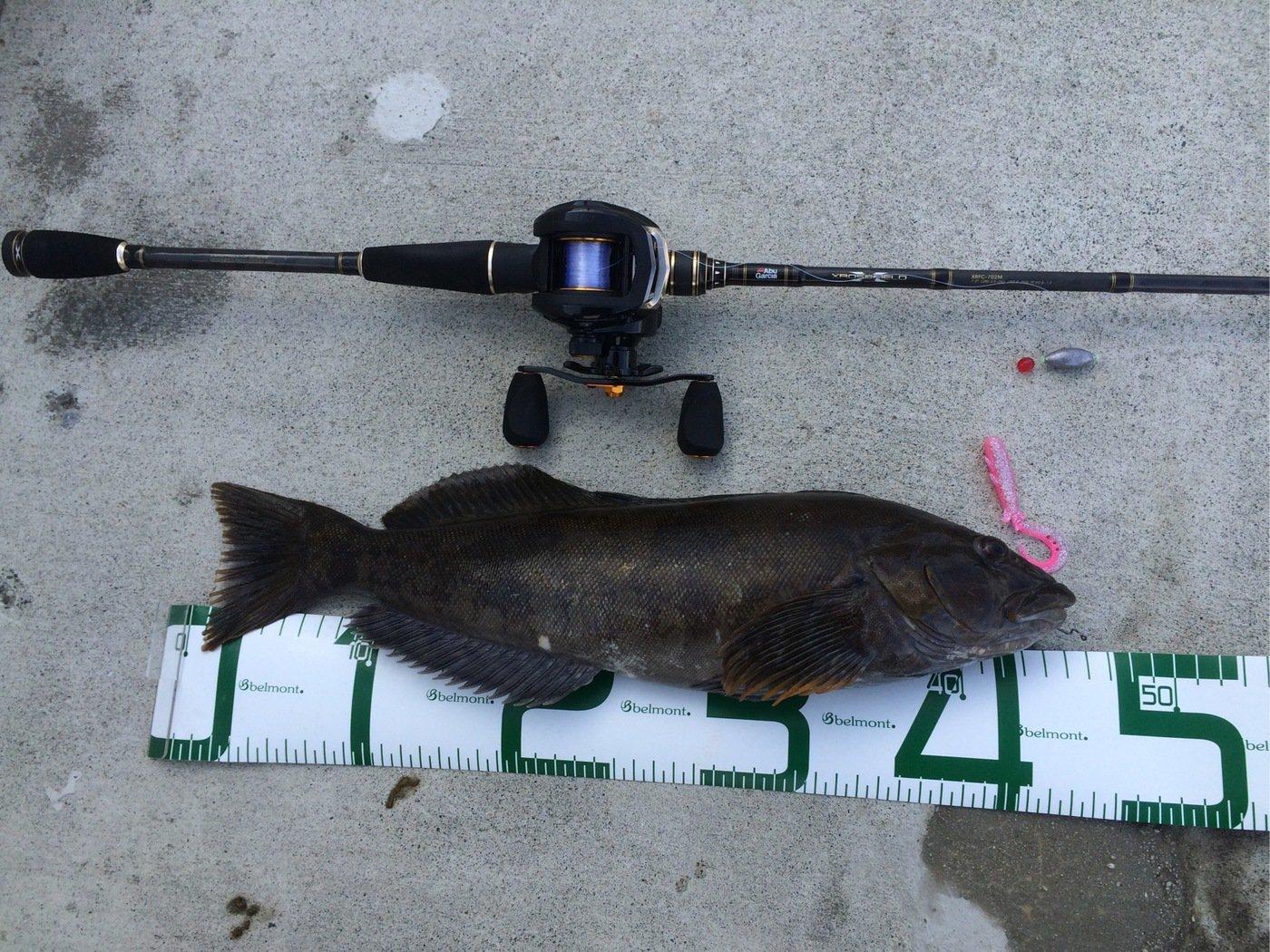 うめ茶屋さんの投稿画像,写っている魚はアイナメ