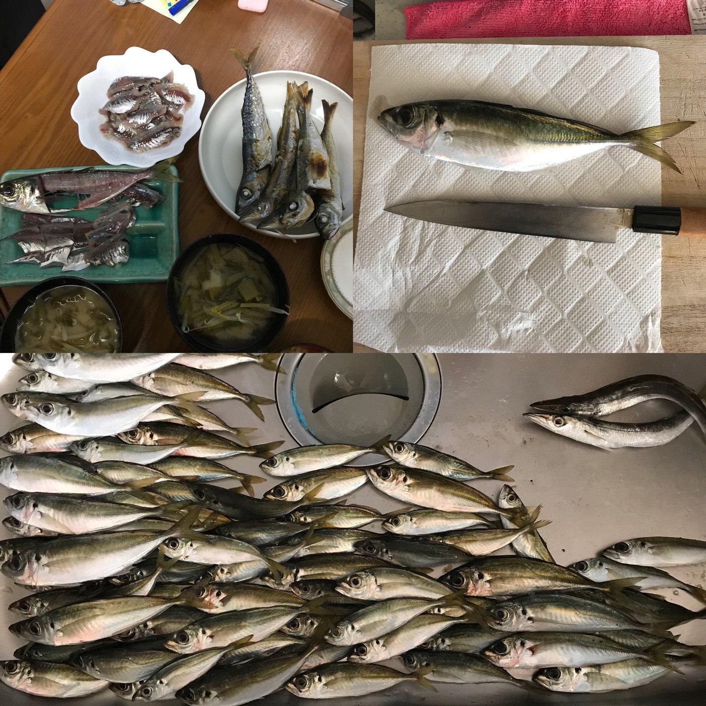 金(きん)さんの投稿画像,写っている魚はアジ,カマス,マサバ