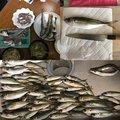 金(きん)さんの千葉県鴨川市でのアジの釣果写真