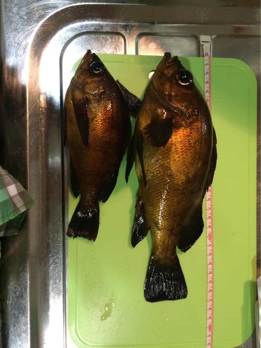 みやそうさんの投稿画像,写っている魚はアカメバル