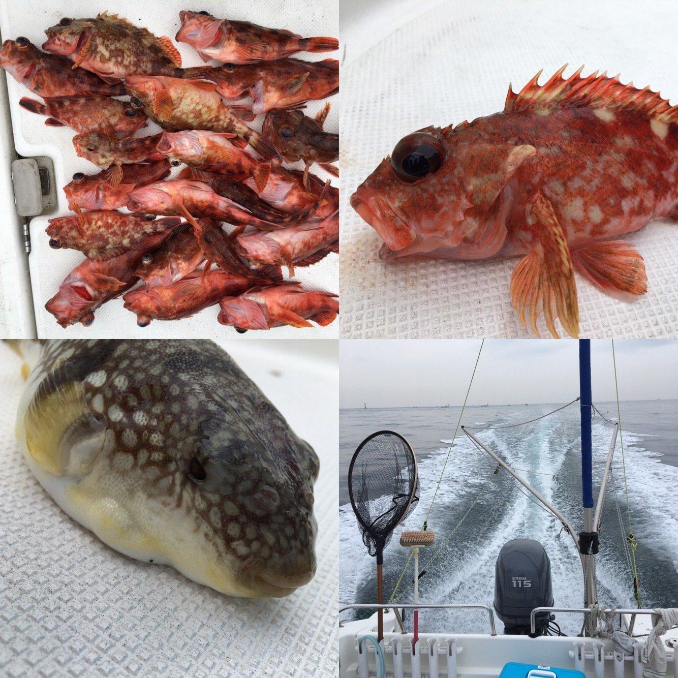 michiさんの投稿画像,写っている魚はカサゴ