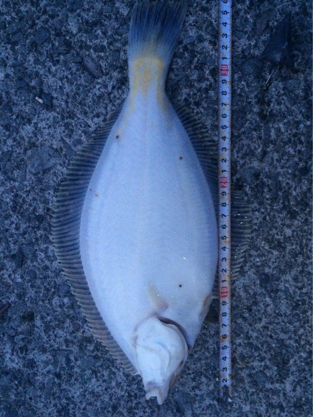 たーちんさんの投稿画像,写っている魚はマガレイ