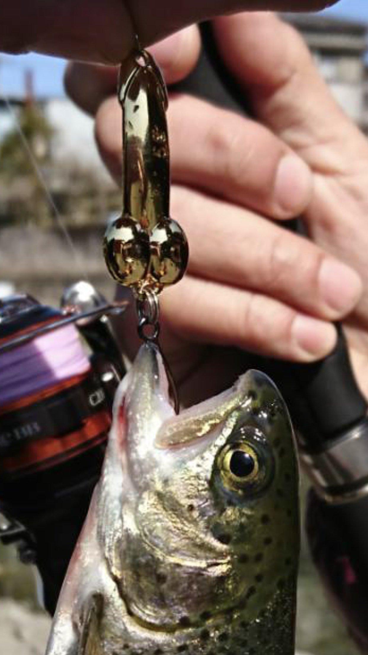 ととのすけさんの投稿画像,写っている魚はニジマス