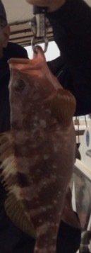 ひろさんの投稿画像,写っている魚はアコウダイ