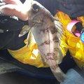 たらこさんの新潟県三島郡でのメバルの釣果写真