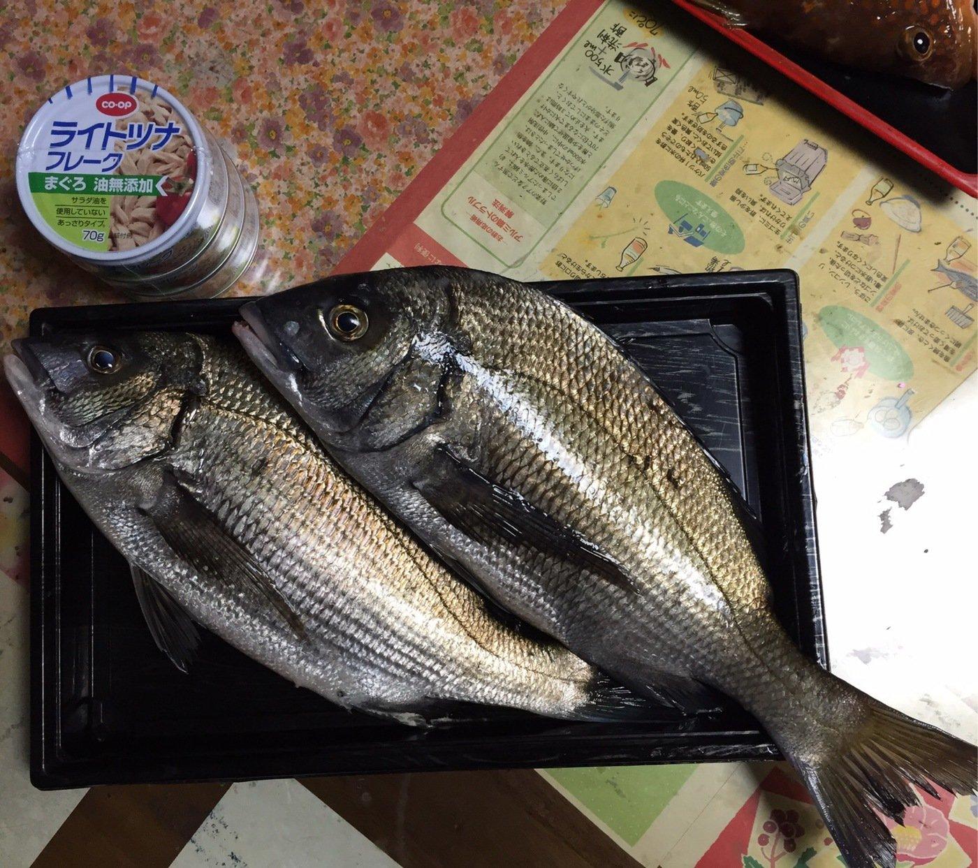 佐藤 紘さんの投稿画像,写っている魚はクロダイ