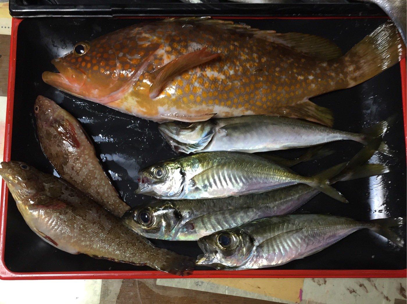 佐藤 紘さんの投稿画像,写っている魚はキジハタ
