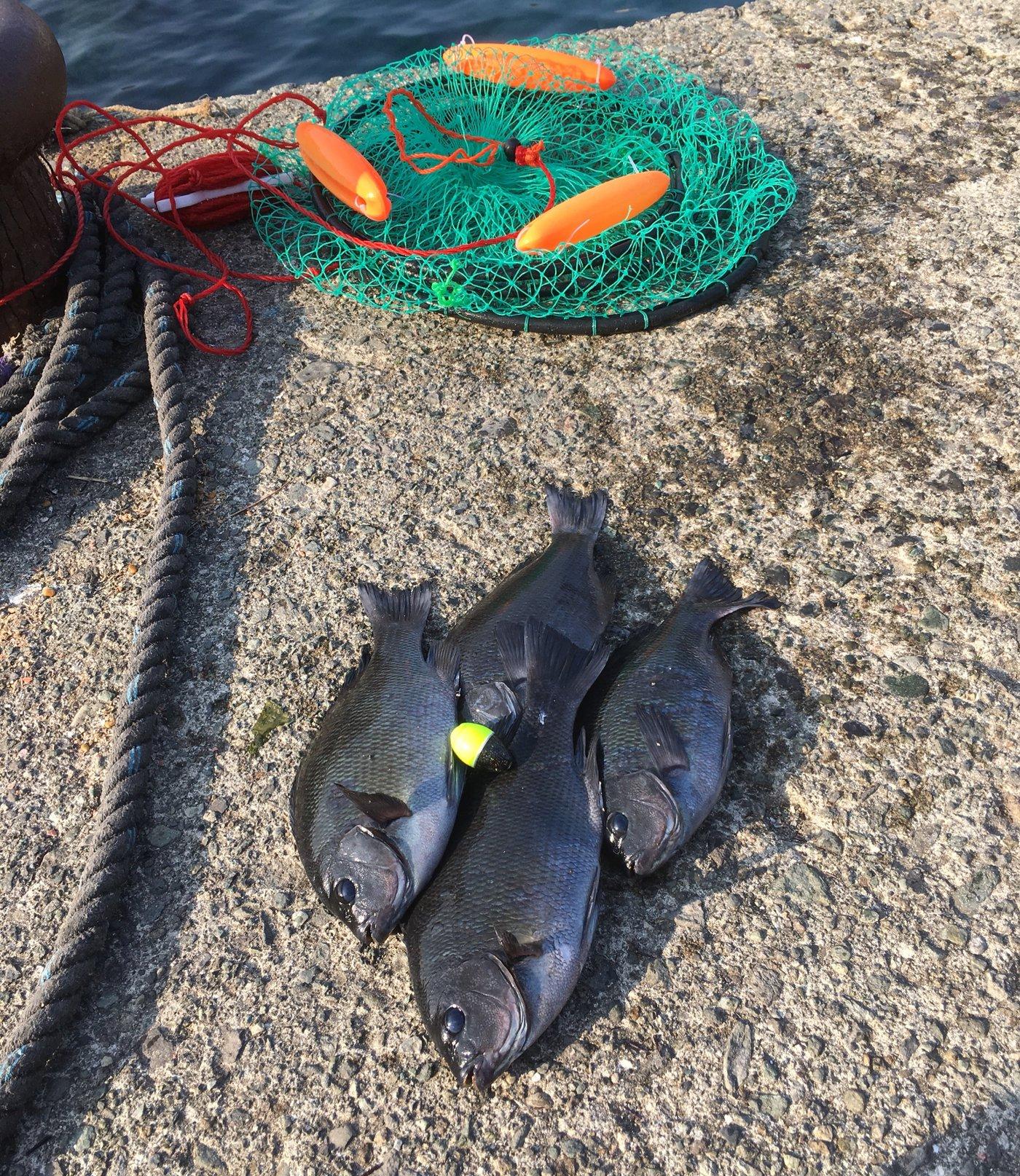 飛沫さんの投稿画像,写っている魚はメジナ