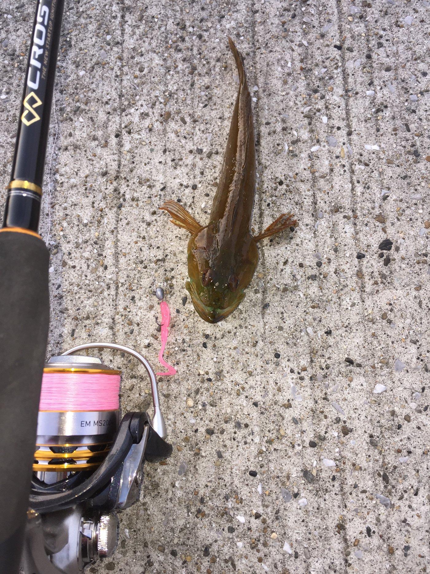 夏遥さんの投稿画像,写っている魚はアナハゼ