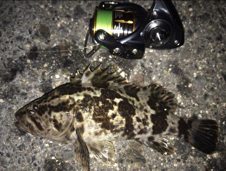 noriさんの投稿画像,写っている魚はタケノコメバル