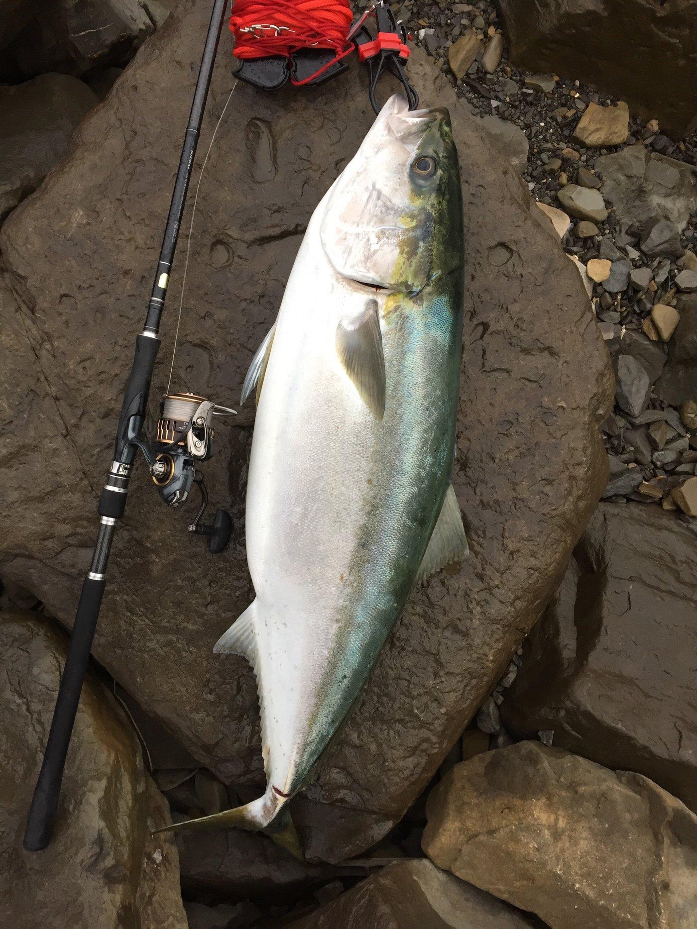 ヨウスケさんの投稿画像,写っている魚はブリ