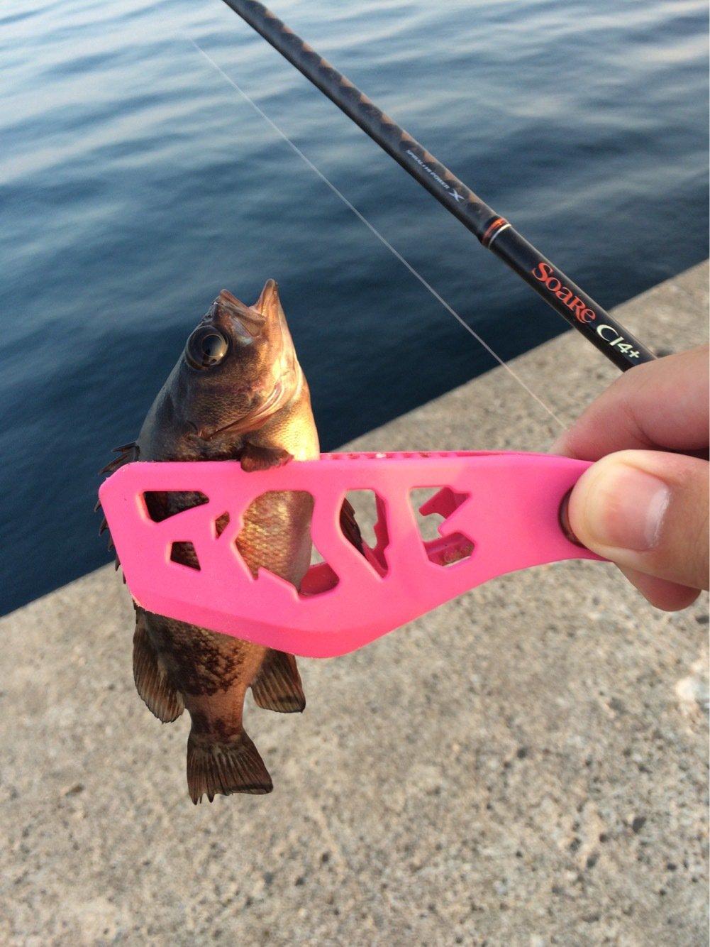 ともたろうさんの投稿画像,写っている魚はメバル