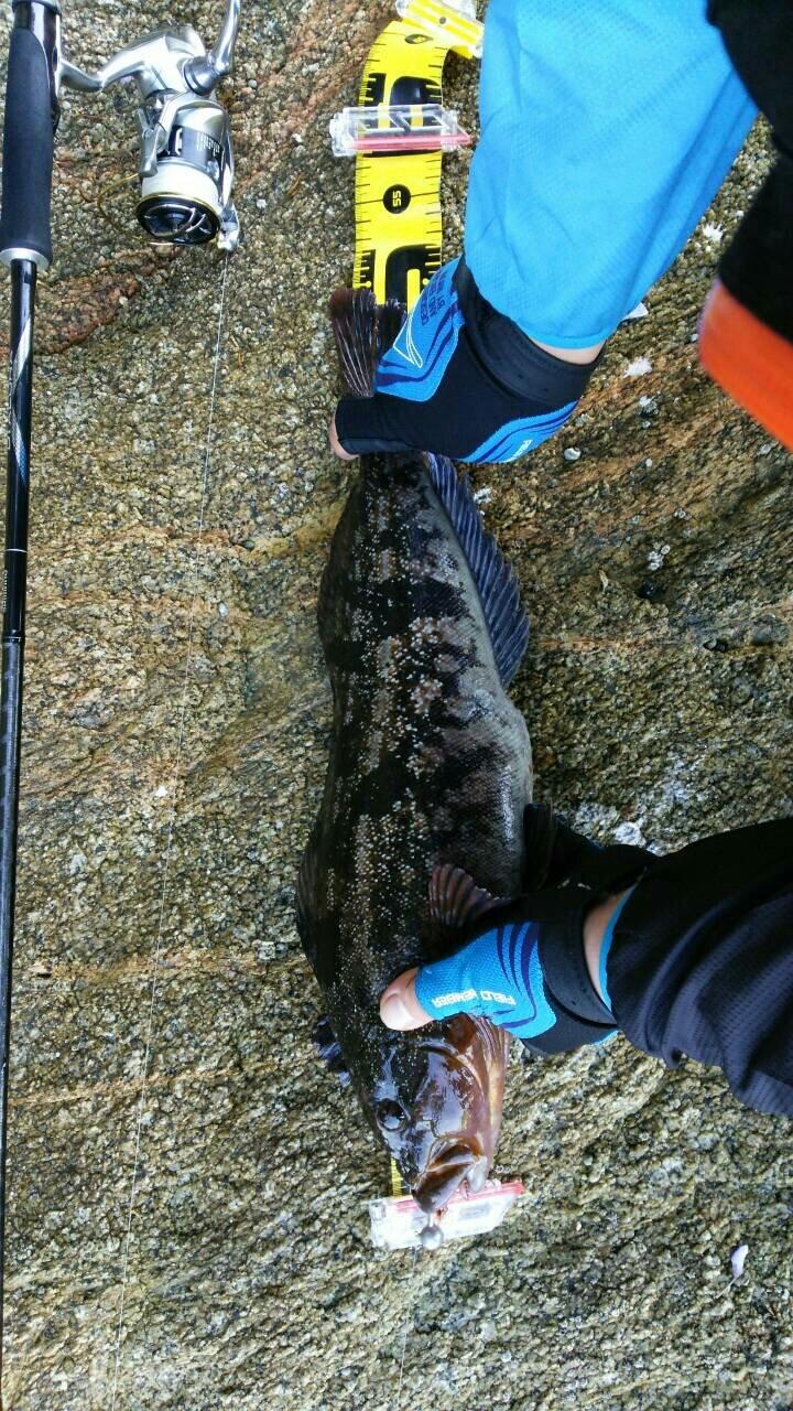 つっかさんの投稿画像,写っている魚はアイナメ