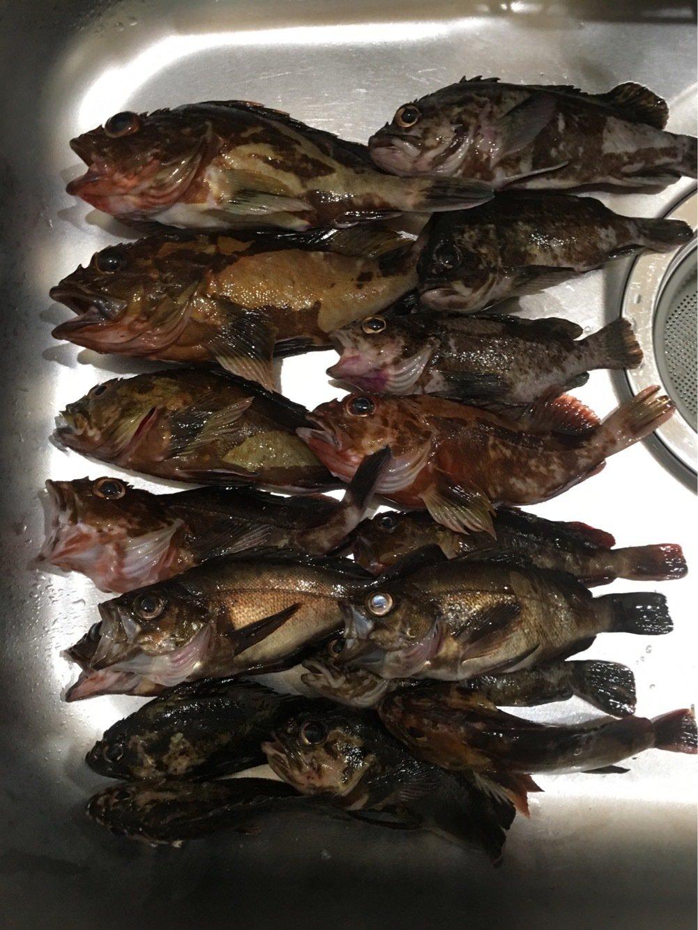 じゅんやさんの投稿画像,写っている魚はカサゴ