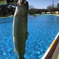 タケシさんの東京都東村山市での釣果写真