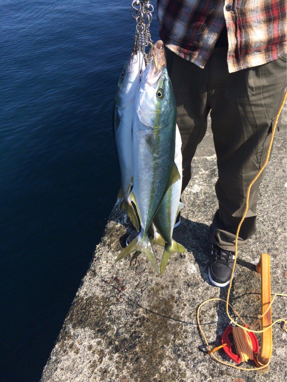 クラゲさんの投稿画像,写っている魚はブリ