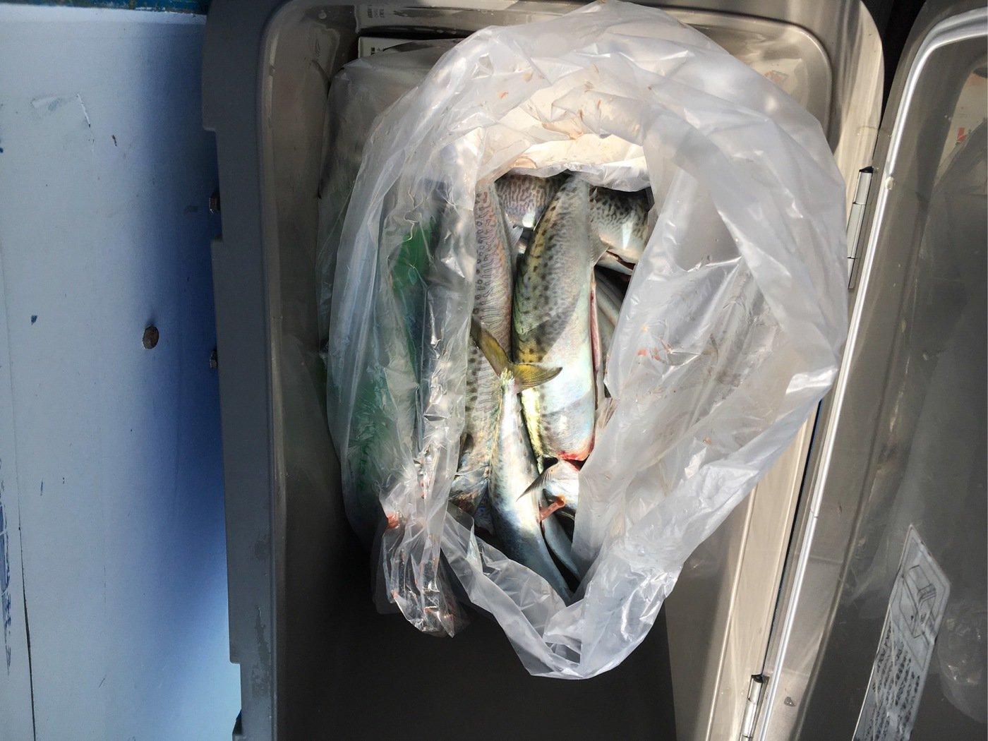 ヒロッシーさんの投稿画像,写っている魚はゴマサバ