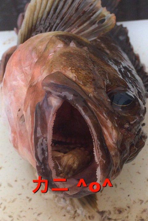 きいちさんの投稿画像,写っている魚はカサゴ