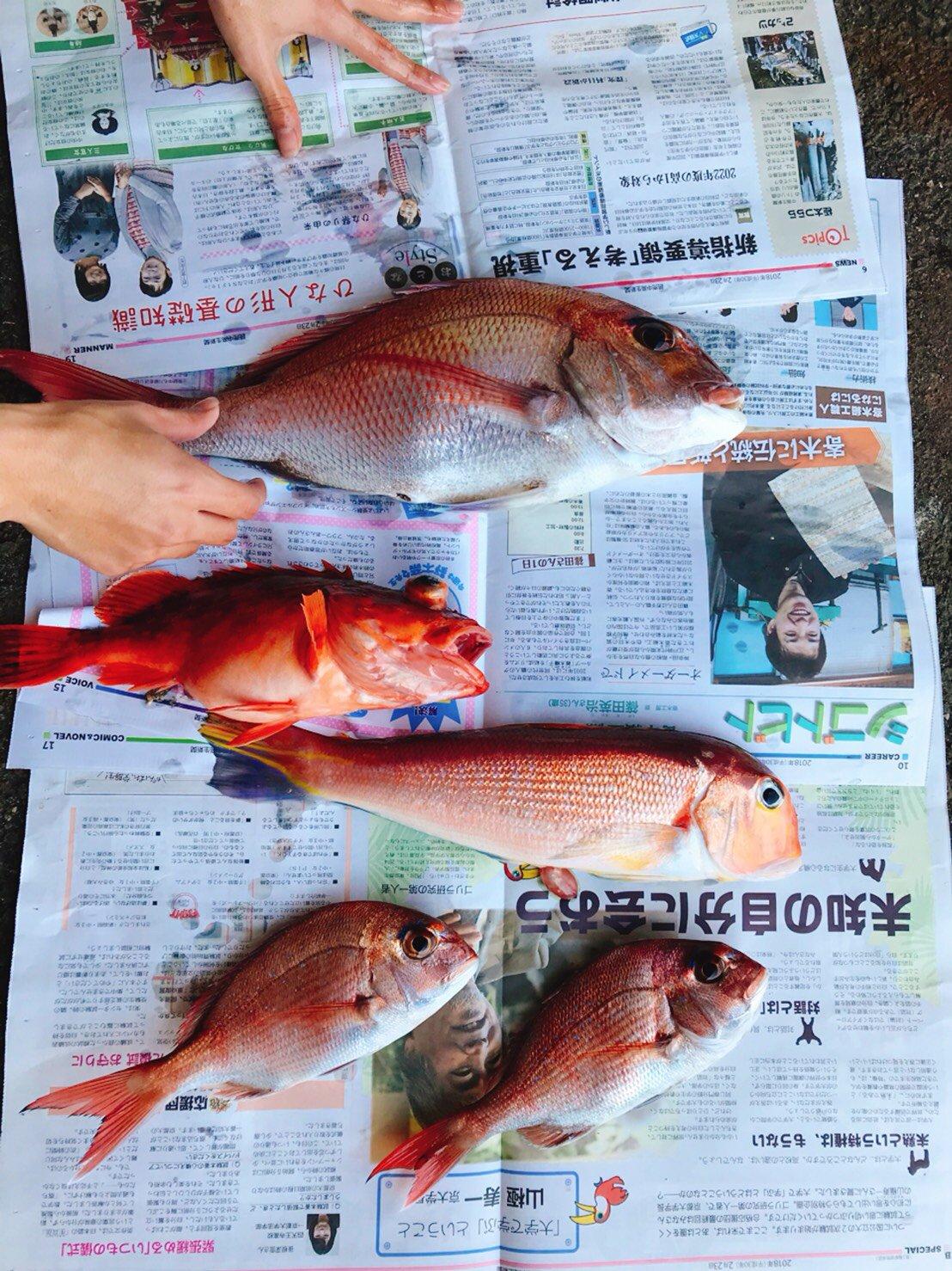 いなしんさんの投稿画像,写っている魚はマダイ,アマダイ,カサゴ