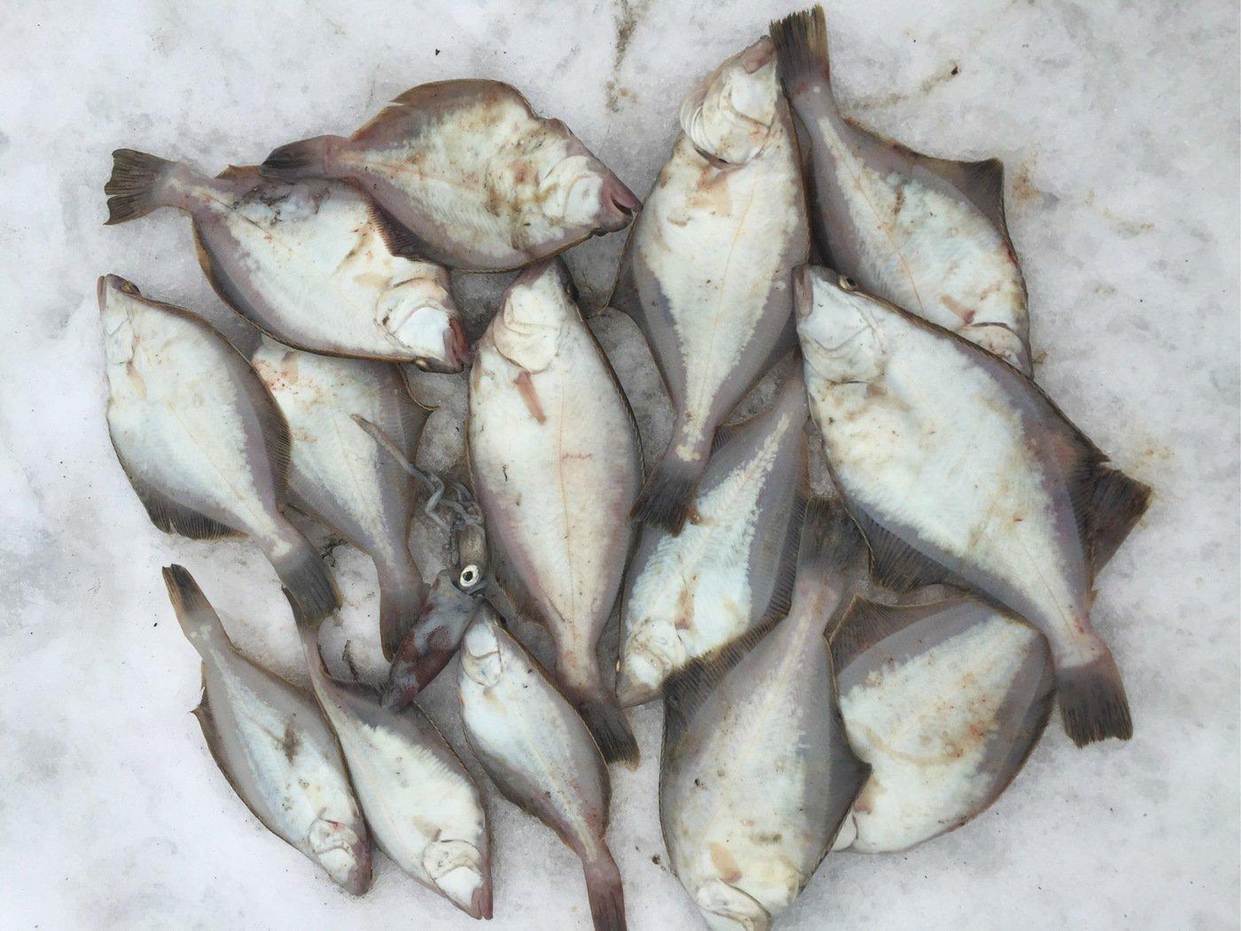 makashiさんの投稿画像,写っている魚はソウハチガレイ