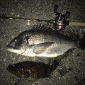 mztkさんの愛知県小牧市での釣果写真