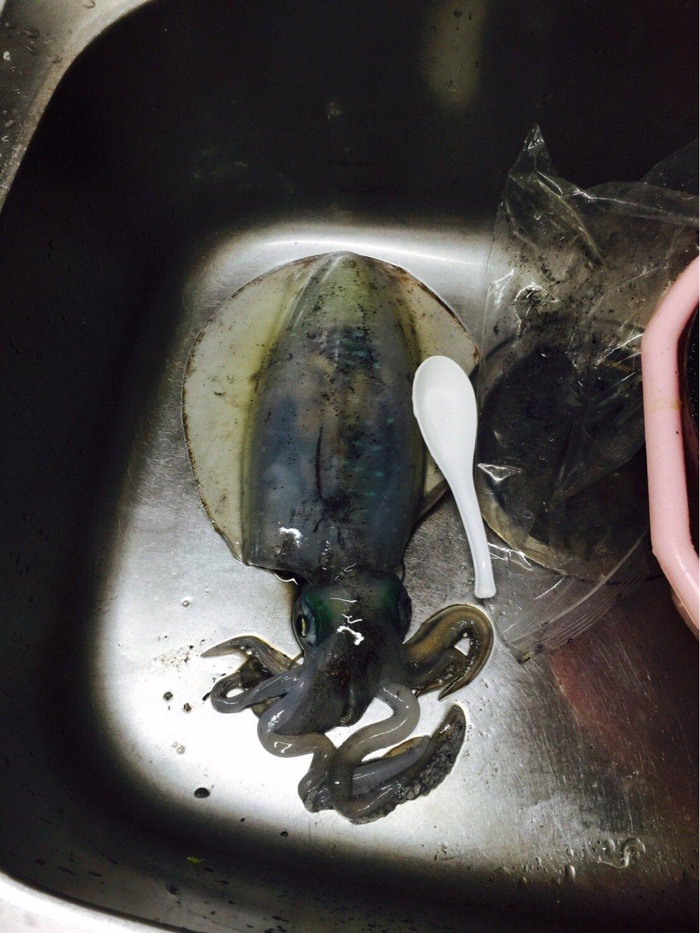 Y U T Aさんの投稿画像,写っている魚はアオリイカ