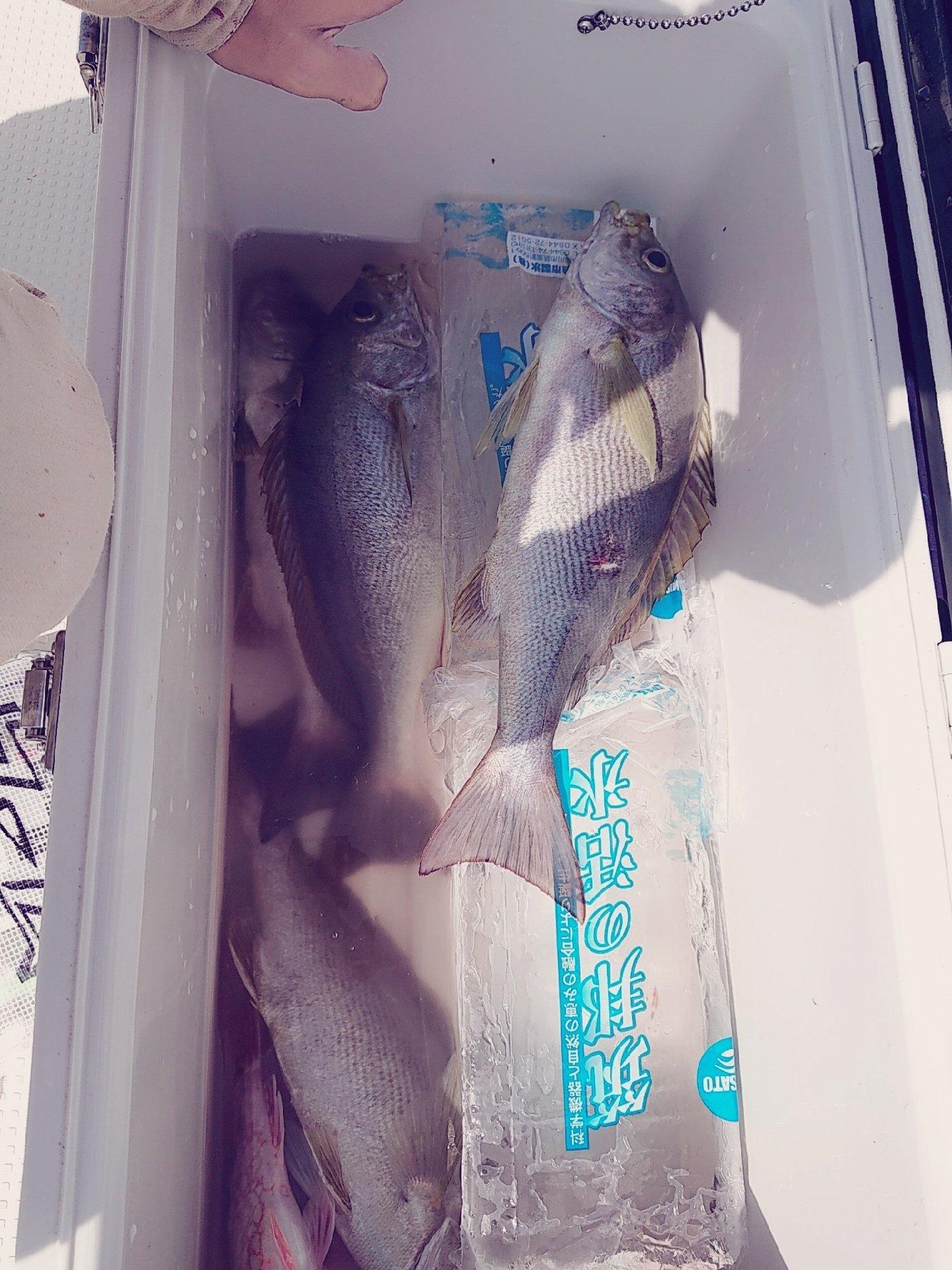 RRRさんの投稿画像,写っている魚は